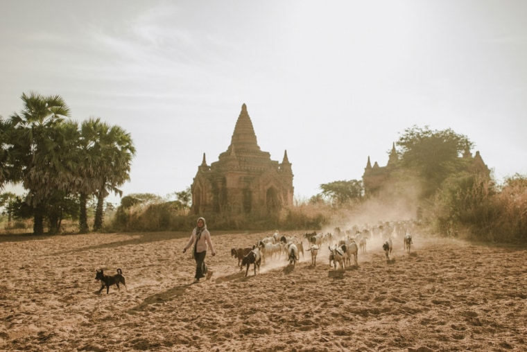 shepherd in bagan